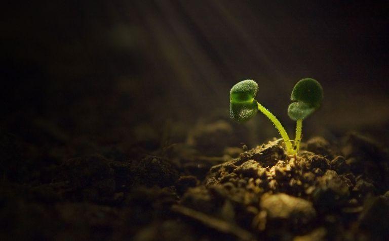 Bitki Stresi: Abiyotik ve Biyotik Faktörler