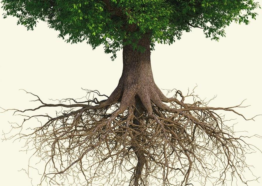Toprağa gizlenen organik yapılar; kökler