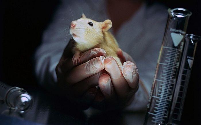 Hayvan deneyleri yerel ve merkezi etik kurulları