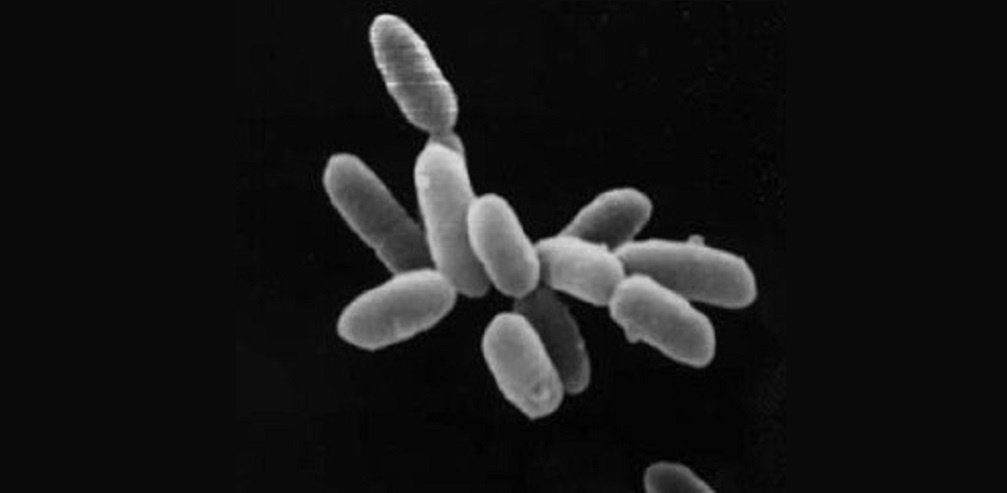 Halobacterium kümesi (archaea)