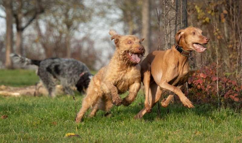 Ses analizi hayvanların da kahkaha attığını gösteriyor