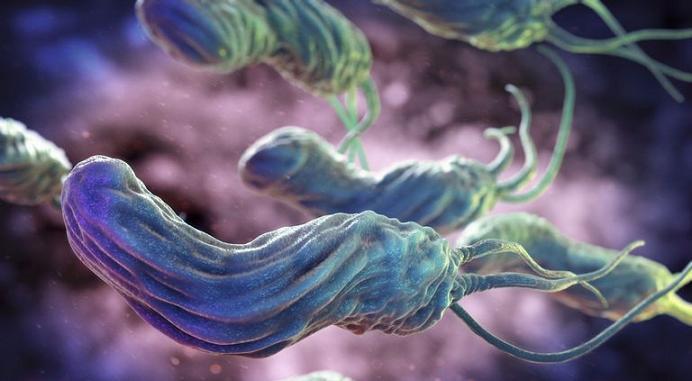 Bakteriler Bizlere Dost mu? Düşman mı?