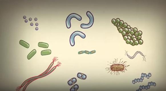 Hücre Nedir ve Hücre Çeşitleri Nelerdir ?