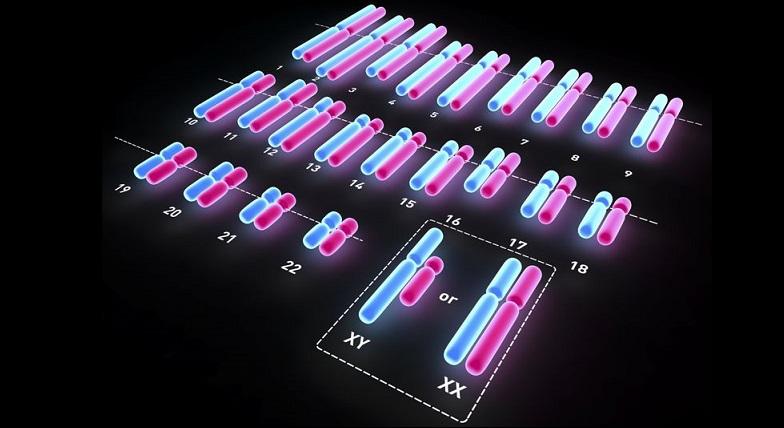 Cinsiyet kromozomları hakkında bilgi