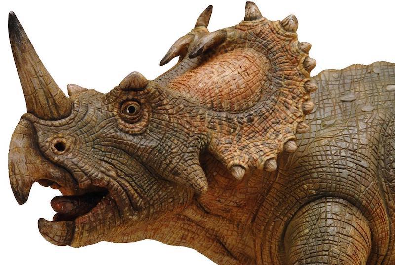 Centrosaurus, burnunun üzerinde uzun bir boynuz bulunan, yaklaşık 6 metre uzunluğunda, dört ayaklı, bitki yiyen bir Kretase Dönemi dinozoruydu. C: Avustralya Müzesi