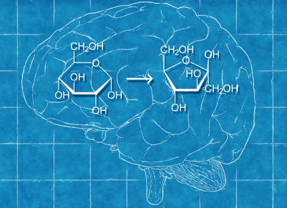 Beyin, Glikozdan Fruktoz Üretiyor!