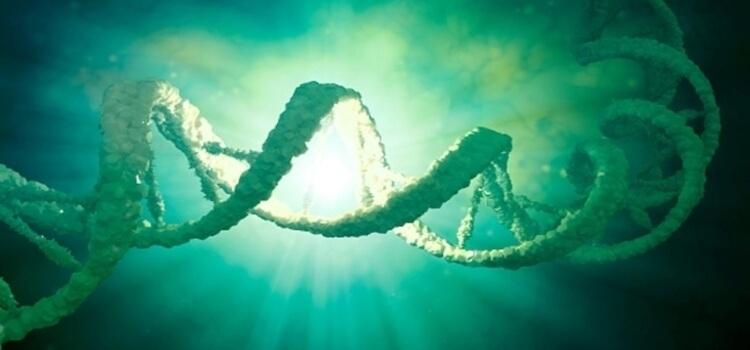 Bitkilerde DNA İzolasyonu
