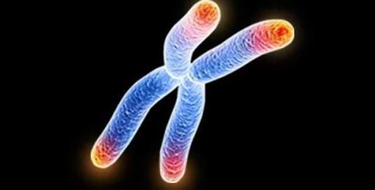 Telomerlerin Yaşlanma Ve Kanser İlişkisindeki Rolü