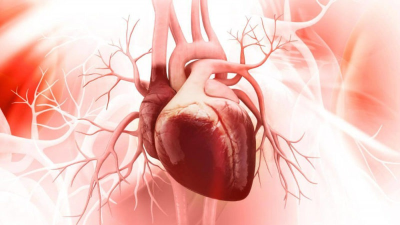 Hücrelerin enerji santralleri mitokondrilerin zarar görmesi, kalp hastalıklarına neden oluyor