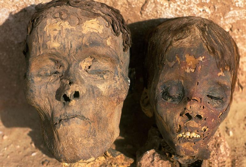 Arteriyel örneği alınan mumyalardan biri, burada görülen mumyalar gibi, Mısır'daki Dakhla Oasis'te bulundu. C: Alamy