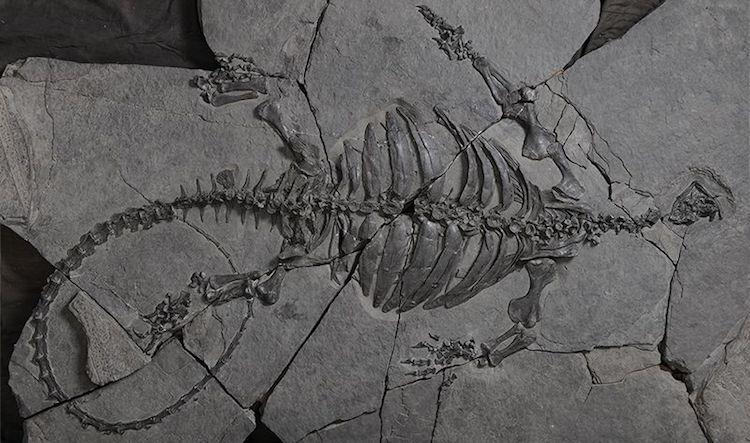 Kabuksuz Kaplumbağa Fosili Bulundu