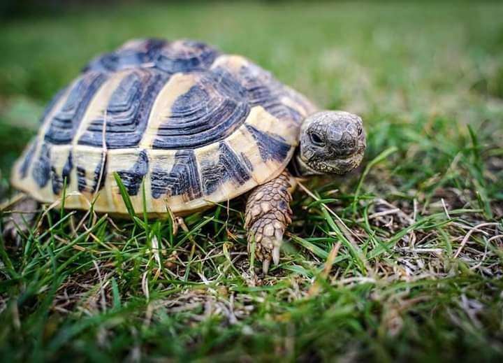 Kaplumbağalarını niçin korumalıyız?