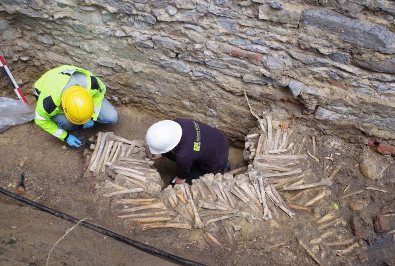 Keşfedilen dokuz duvar, kafataslarından ve büyük ölçüde uzun kemiklerden yapılmış. C: Ruben Willaert