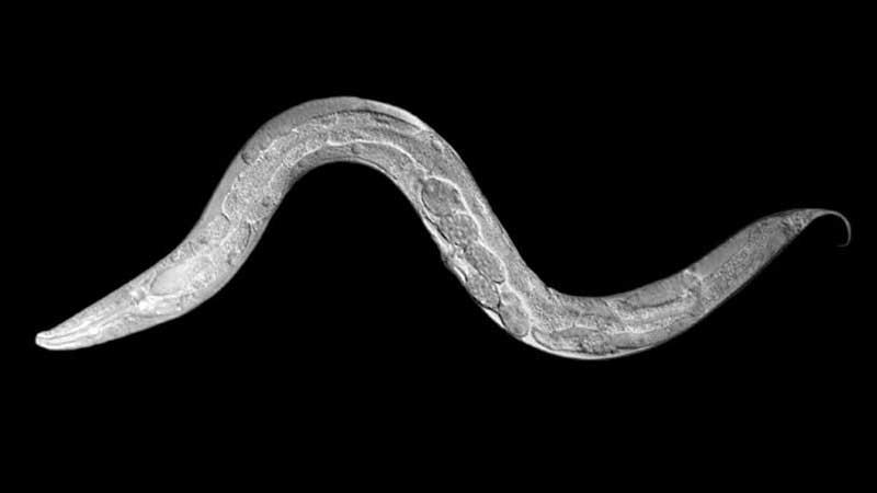 Gizli genetik çeşitlilik ve adaptasyon – 2
