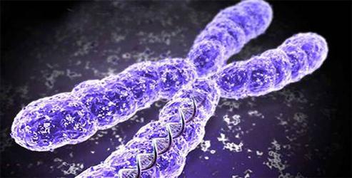 İlk Gen Terapisi