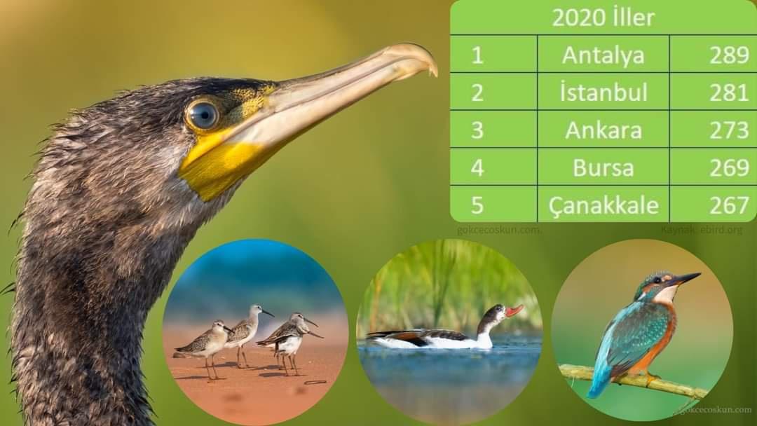 2020 yılında Türkiye'de en fazla kuş türü Antalya'da gözlendi.