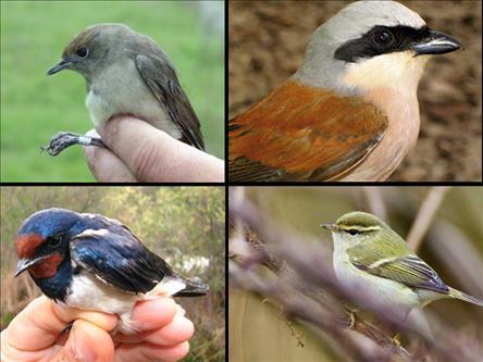 Ülkemizde Kuş Halkalama Çalışmaları