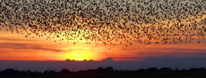 Kuşların Göç Etmesinin Nedeni Nedir?
