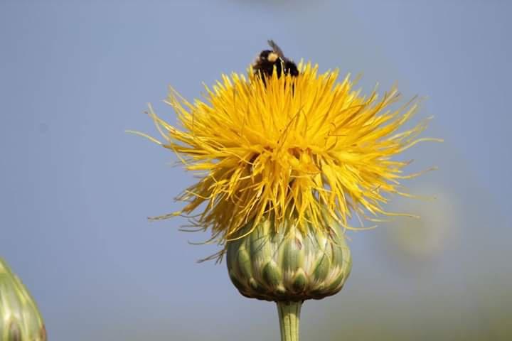 Ekosistemi Koruma ve Doğa Sevenl