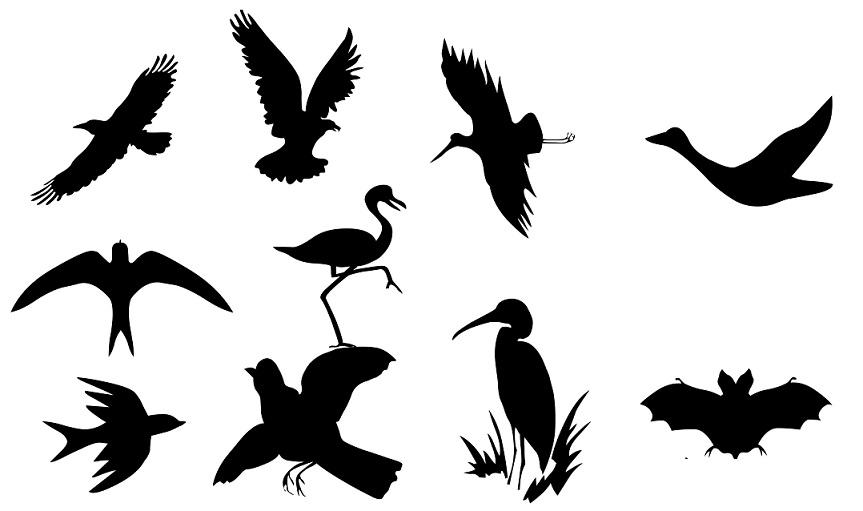 Kuşların Sınıflandırılması (Kuşların Alt Sınıfları) - Zooloji