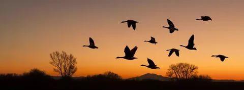 Türkiye kuşlar listesi