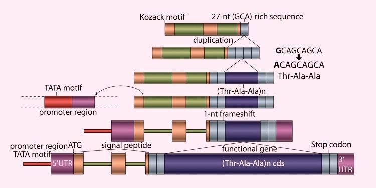 Kuzey Kutup Balıklarındaki Antifriz Geninin, Kodlamayan DNA Kökenli Olduğu Belirlendi