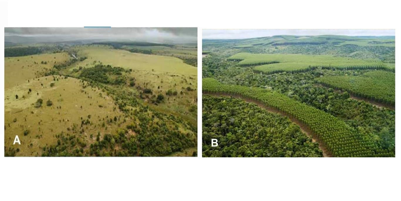 Yeni nesil ağaçlandırma projeleri