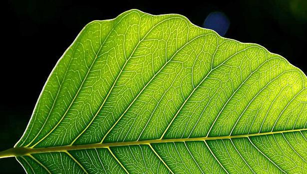 Fotosentezin tarihsel süreci