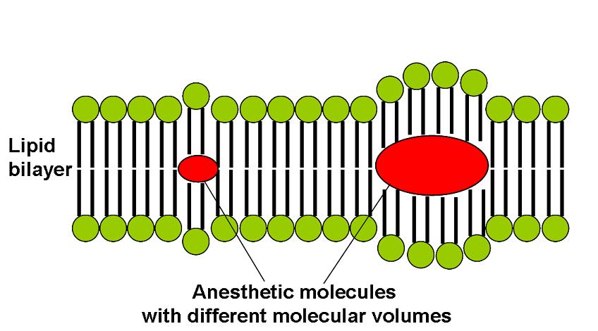 Lipidlerin vücuda alınması