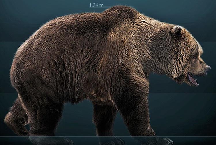 15 bin yıl önce nesli tükenen mağara ayısının bütünlüğü korunmuş iskeleti bulundu