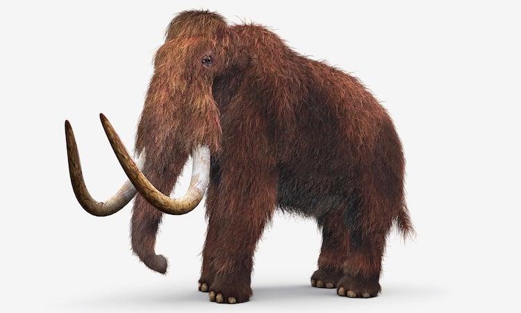 Mamutlar, Koruma Altına Alınan İlk Nesli Tükenmiş Hayvan Olabilir