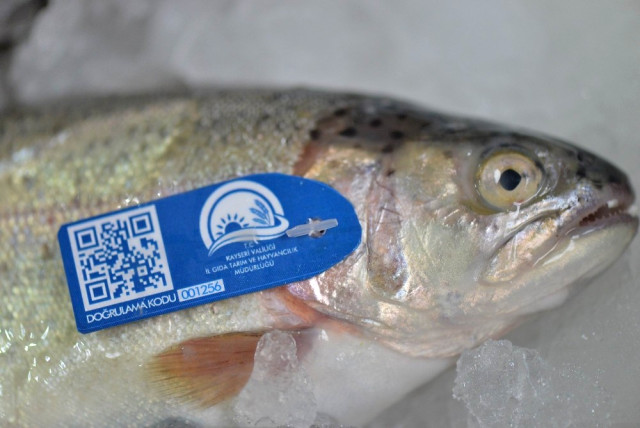Balık Ticaretine Teknoloji Desteği