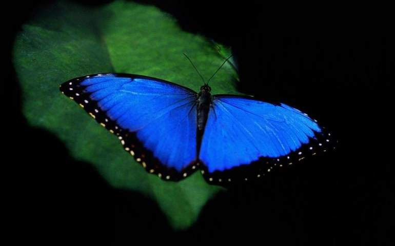 Mavi Renk Canlılarda Neden Çok Nadir Bulunur?