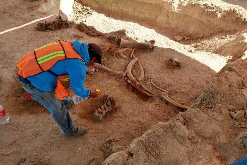 Meksiko'nun hemen kuzeyindeki eski Santa Lucia askeri hava üssünde yaklaşık 60 mamut kemiğinin bulunduğu alanda çalışan bir arkeolog. C: INAH