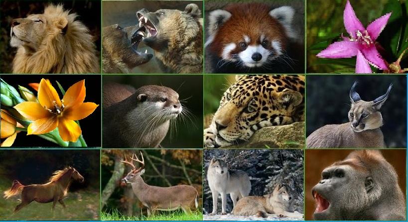 Hayvanların ve bitkilerin ortak özellikleri nelerdir?
