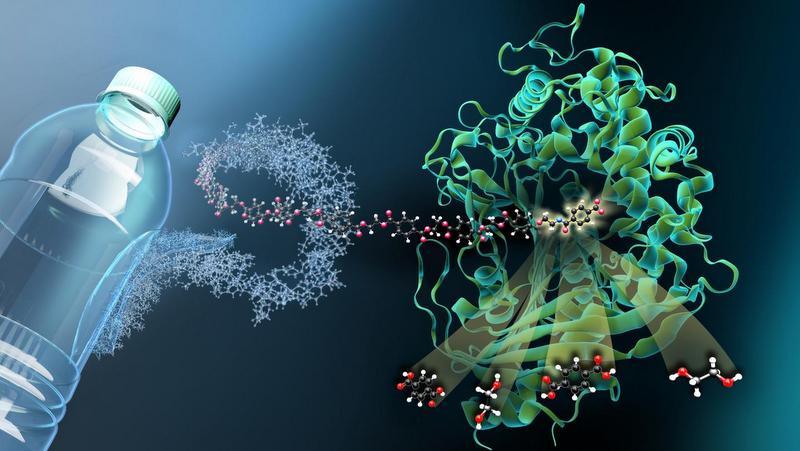 Evrimin insanlığa kıyağı: Plastik yiyen Ideonella sakaiensis