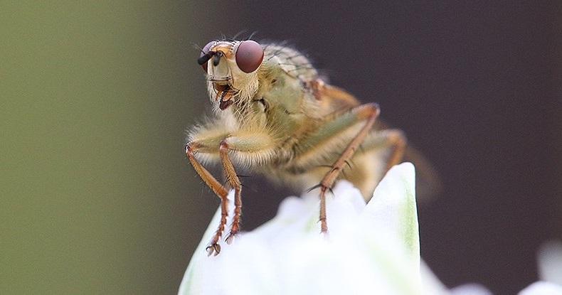Kanatlı böcekler ciddi oranlarda kayba uğruyor ve bunun için kesinlikle endişelenmeliyiz