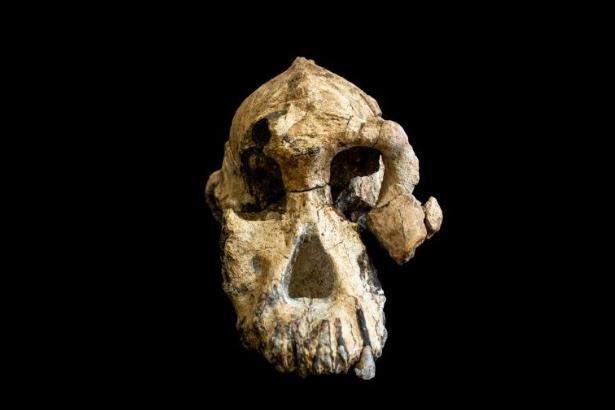 Etiyopya'da 3,8 milyon yıllık insansı fosili bulundu