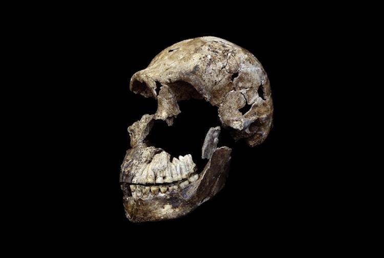 Homo Naledi Küçük Ama Karmaşık Bir Beyne Sahipti
