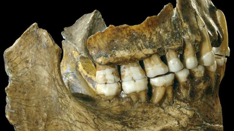 450.000 Yıllık Dişler Neandertal Benzeri Özellikler Taşıyor