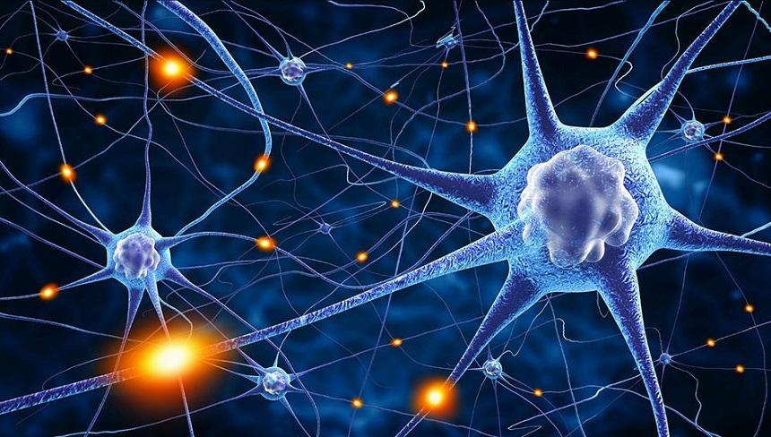 Sinir Sistemi Yapısında Bulunan Hücre Tipleri ve Özellikleri Nelerdir?