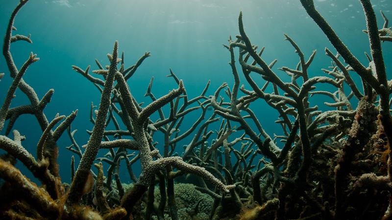 Okyanuslar değişiyor: Güney Okyanusu'ndaki asitlenmeye yeni bakış