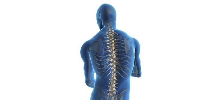 Omurga, columna vertebralis nedir ? Görevleri nelerdir ?