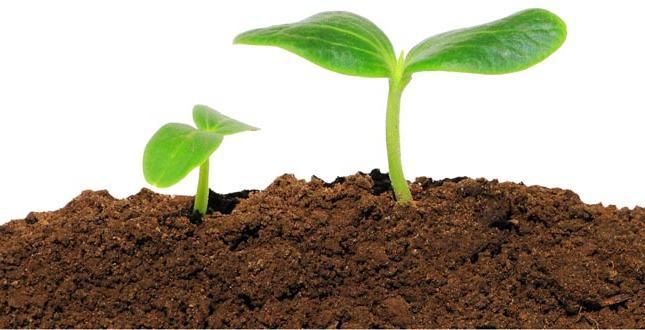 Organik Tarım - Toprak Organik Maddelerinin Devamlılığı ve Korunabilirliği