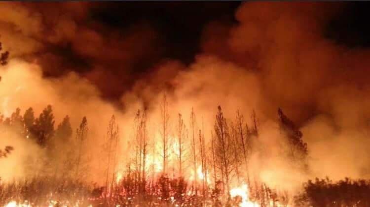 Orman yangınları nasıl gelişir ve önleyici tedbirler nelerdir?