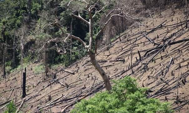Orman yıkımı nedir? Orman yıkımı neden insanlar ve vahşi yaşam için zararlıdır?