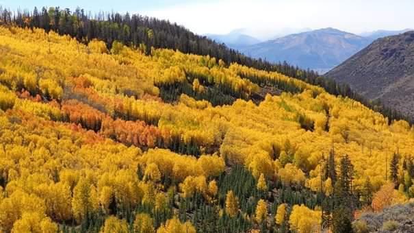 Ormancılıkta öncü bitki ne demektir?