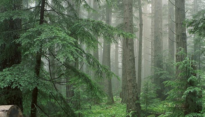 Orman çeşitleri nelerdir ?