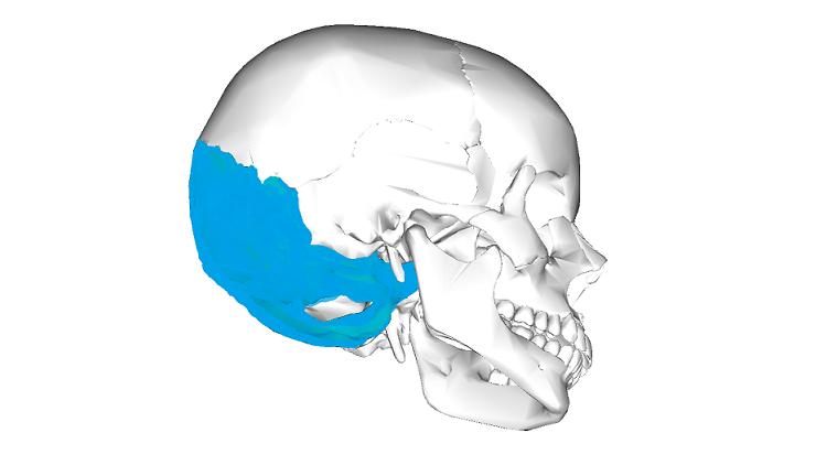 Art Kafa Kemigi Os Occipitale Anatomi Bu oluk clivus adını almaktadır. art kafa kemigi os occipitale anatomi