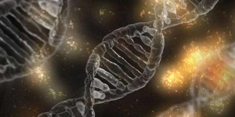 Otsu Bitkiler Arası Yatay Gen Aktarımları İnceleniyor